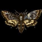 jin ong moth sq sml.png